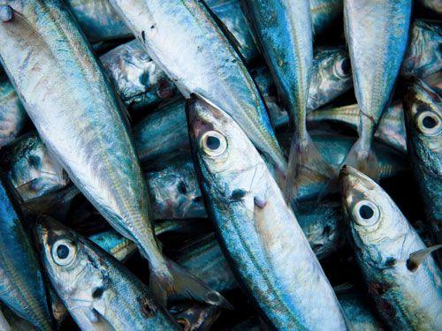 El pescado es rico en Omega-3