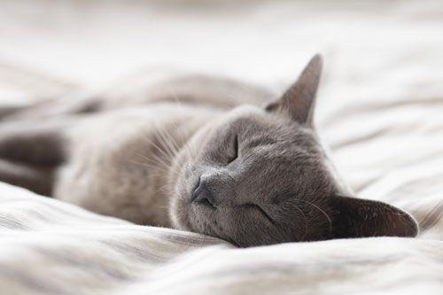 Gato-gris-durmiendo