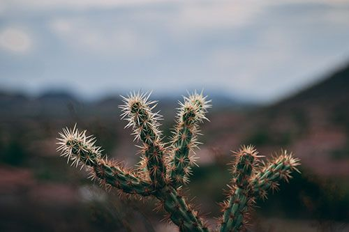 Un cáctus sobre el fondo del desierto