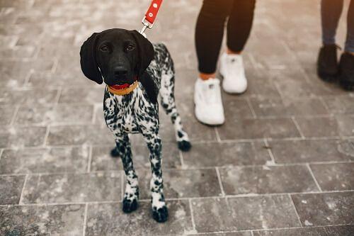 pasear perro ansiedad